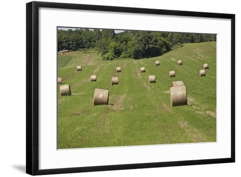 Minnesota. Dakota County, Rolled Bales of Hay in a Green Field-Bernard Friel-Framed Art Print