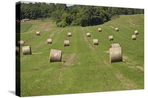 Minnesota. Dakota County, Rolled Bales of Hay in a Green Field-Bernard Friel-Stretched Canvas Print