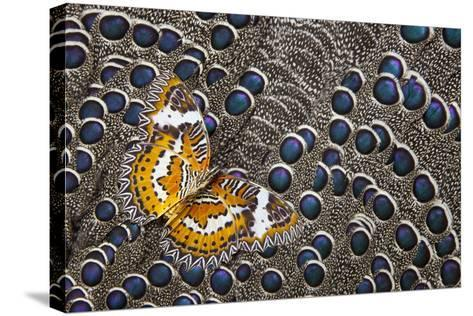 Lacewing Butterfly on Grey Peacock Pheasant Feather Design-Darrell Gulin-Stretched Canvas Print