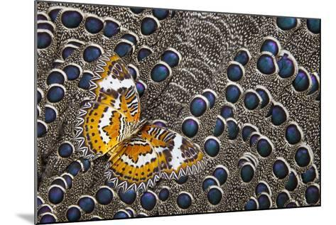 Lacewing Butterfly on Grey Peacock Pheasant Feather Design-Darrell Gulin-Mounted Photographic Print