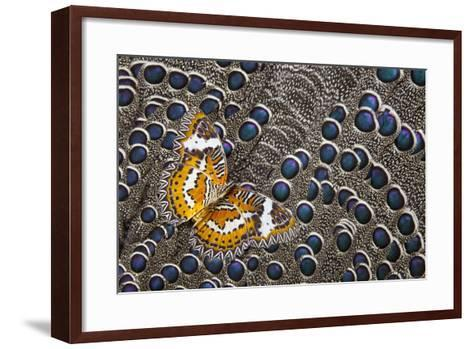Lacewing Butterfly on Grey Peacock Pheasant Feather Design-Darrell Gulin-Framed Art Print