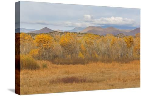 New Mexico, Bosque del Apache NWR. Fall Colors in Grasses-Don Paulson-Stretched Canvas Print