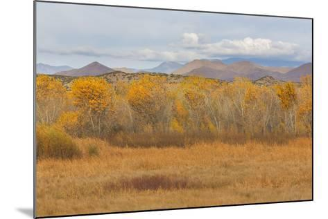 New Mexico, Bosque del Apache NWR. Fall Colors in Grasses-Don Paulson-Mounted Photographic Print