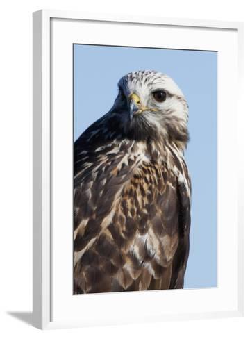 Rough-Legged Hawk-Ken Archer-Framed Art Print