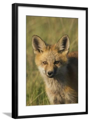 Red Fox Kit-Ken Archer-Framed Art Print