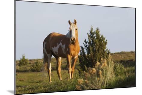 Wild Horse, Steens Mountains-Ken Archer-Mounted Photographic Print