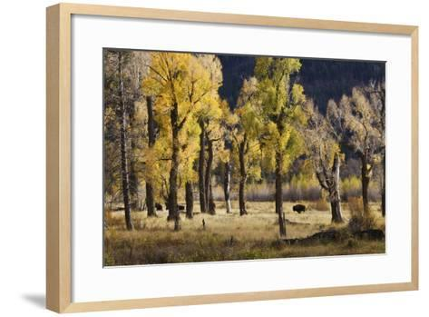 Lamar Valley Bison, Yellowstone-Ken Archer-Framed Art Print