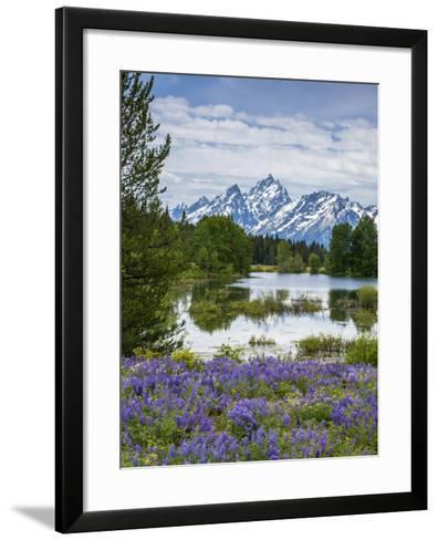 Lupine Flowers with the Teton Mountains in the Background-Howie Garber-Framed Art Print
