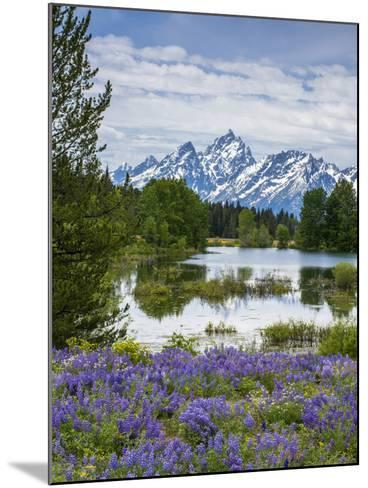 Lupine Flowers with the Teton Mountains in the Background-Howie Garber-Mounted Photographic Print