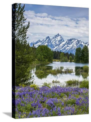 Lupine Flowers with the Teton Mountains in the Background-Howie Garber-Stretched Canvas Print