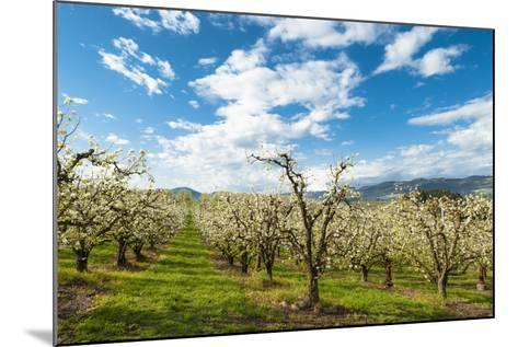 USA, Oregon Hood River, Valley. Apple Orchard Near Hood River-Richard Duval-Mounted Photographic Print