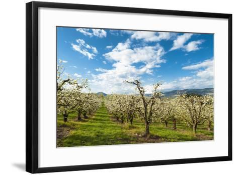 USA, Oregon Hood River, Valley. Apple Orchard Near Hood River-Richard Duval-Framed Art Print