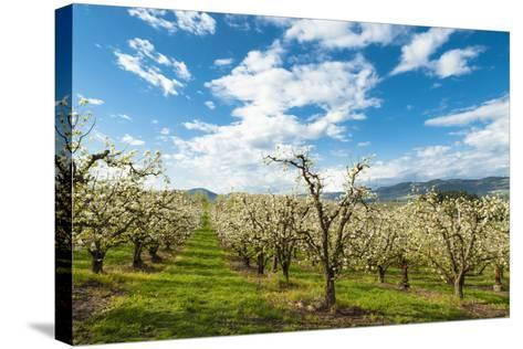USA, Oregon Hood River, Valley. Apple Orchard Near Hood River-Richard Duval-Stretched Canvas Print