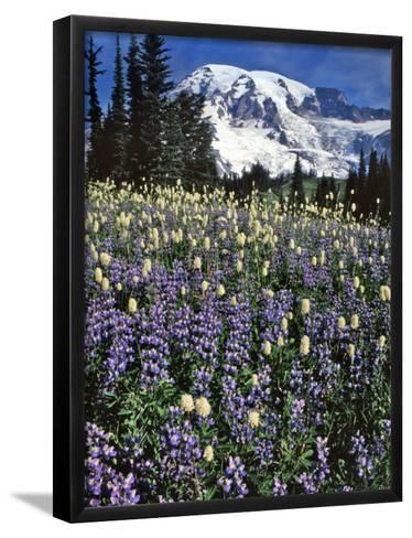 USA, Washington State, Paradise Park. Field of Lupine and Bistort-Steve Terrill-Framed Art Print