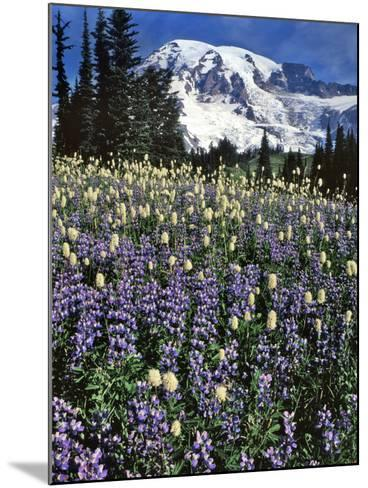 USA, Washington State, Paradise Park. Field of Lupine and Bistort-Steve Terrill-Mounted Photographic Print