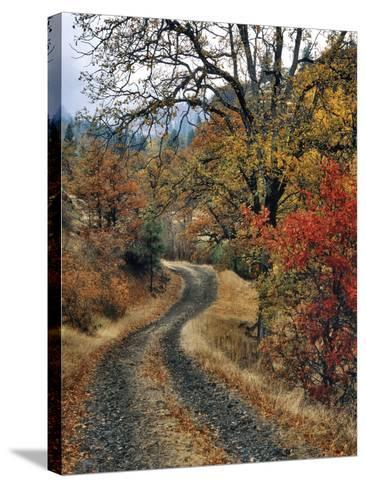 Washington, Columbia River Gorge. Road and Autumn-Colored Oaks-Steve Terrill-Stretched Canvas Print