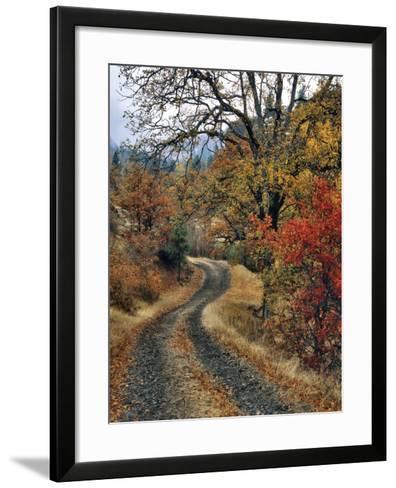 Washington, Columbia River Gorge. Road and Autumn-Colored Oaks-Steve Terrill-Framed Art Print