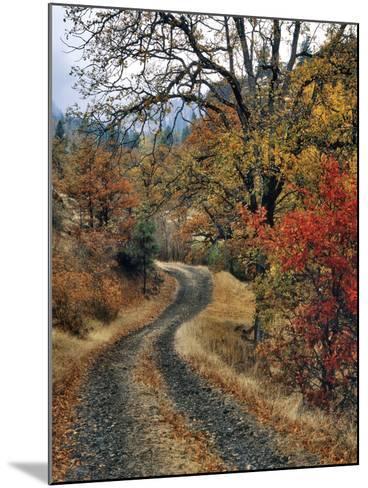 Washington, Columbia River Gorge. Road and Autumn-Colored Oaks-Steve Terrill-Mounted Photographic Print