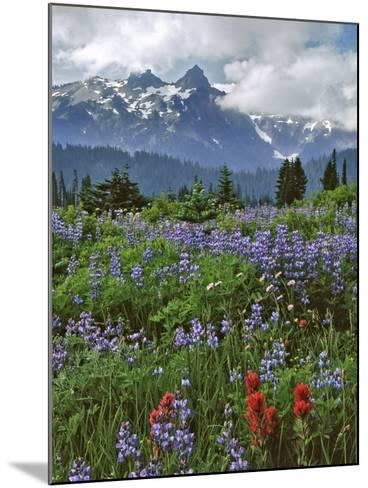 Washington State, Mount Rainier NP. Lupine and Paintbrush in Meadow-Steve Terrill-Mounted Photographic Print
