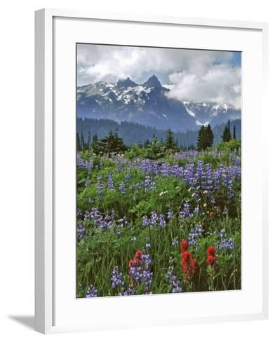 Washington State, Mount Rainier NP. Lupine and Paintbrush in Meadow-Steve Terrill-Framed Art Print