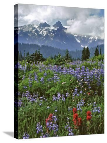 Washington State, Mount Rainier NP. Lupine and Paintbrush in Meadow-Steve Terrill-Stretched Canvas Print