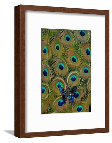 Meliboeus Swordtail Butterfly on Peacock Tail Feather Design-Darrell Gulin-Framed Art Print