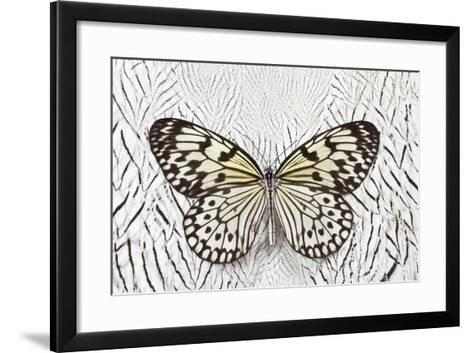 Paper Kite Butterfly on Silver Pheasant Feather Pattern-Darrell Gulin-Framed Art Print