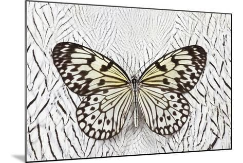Paper Kite Butterfly on Silver Pheasant Feather Pattern-Darrell Gulin-Mounted Photographic Print