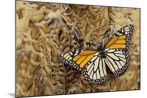 Underside Monarch Butterfly on Ring-Necked Pheasant Feather Design-Darrell Gulin-Mounted Photographic Print