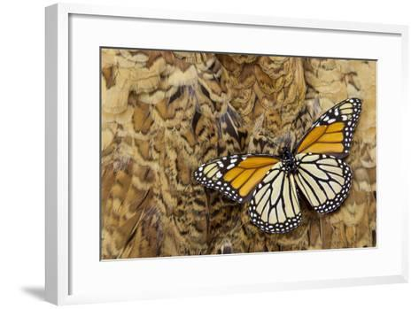 Underside Monarch Butterfly on Ring-Necked Pheasant Feather Design-Darrell Gulin-Framed Art Print