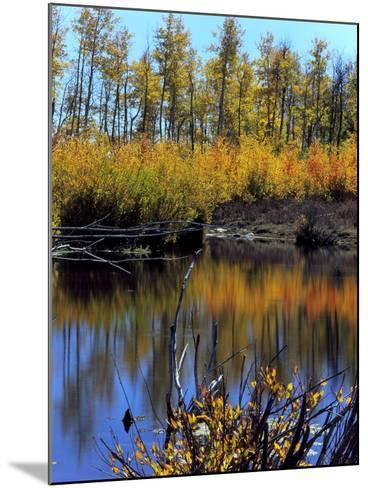 Utah. USA. Willows and Aspens in Autumn at Beaver Pond in Logan Canyon-Scott T^ Smith-Mounted Photographic Print