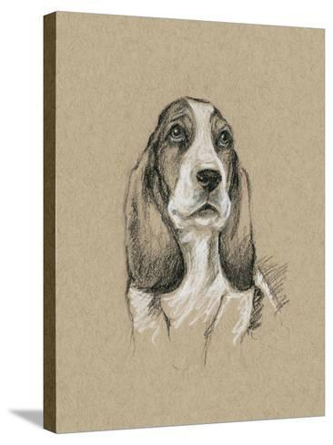 Breed Sketches VI-Ethan Harper-Stretched Canvas Print