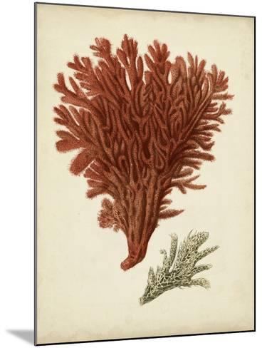 Antique Red Coral V-Vision Studio-Mounted Art Print