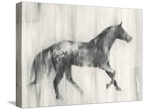 Appaloosa Study I-Ethan Harper-Stretched Canvas Print