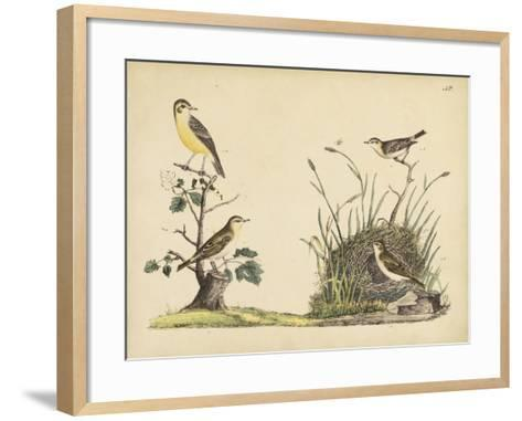 Wrens, Warblers and Nests II-Friedrich Strack-Framed Art Print