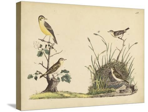 Wrens, Warblers and Nests II-Friedrich Strack-Stretched Canvas Print