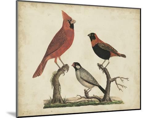Cardinal and Grosbeak-Friedrich Strack-Mounted Art Print