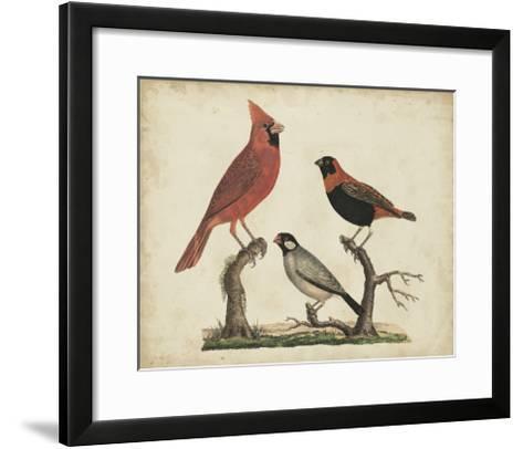 Cardinal and Grosbeak-Friedrich Strack-Framed Art Print