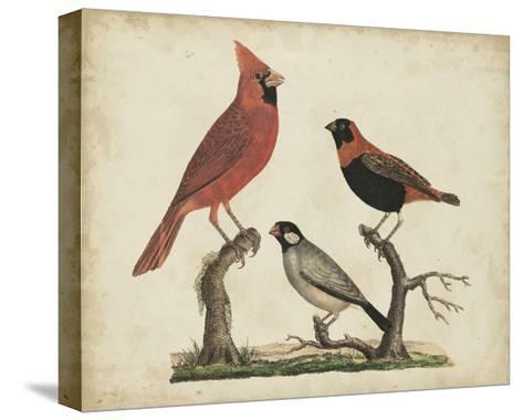 Cardinal and Grosbeak-Friedrich Strack-Stretched Canvas Print