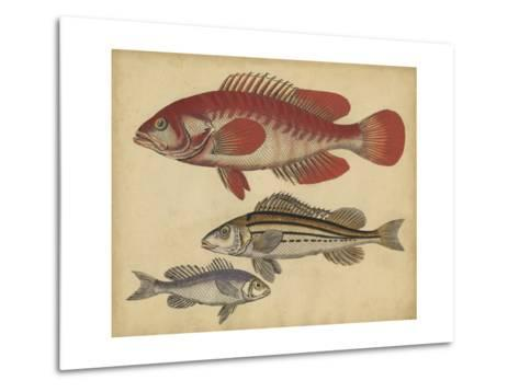 Species of Fish II-Friedrich Strack-Metal Print