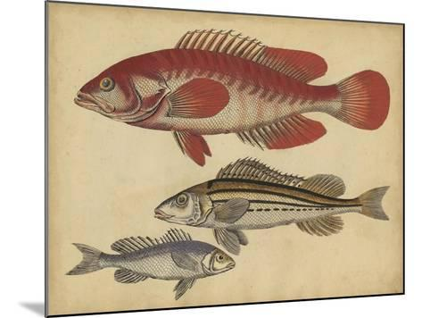 Species of Fish II-Friedrich Strack-Mounted Art Print