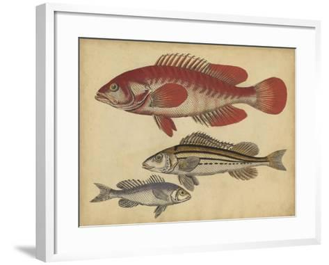 Species of Fish II-Friedrich Strack-Framed Art Print