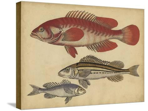 Species of Fish II-Friedrich Strack-Stretched Canvas Print