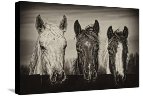 Three Amigos I-PHBurchett-Stretched Canvas Print