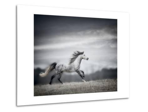 Wind Blown Mane II-PHBurchett-Metal Print