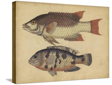 Species of Fish IV-Friedrich Strack-Stretched Canvas Print
