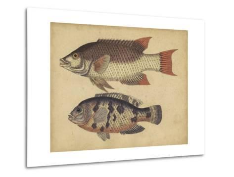 Species of Fish IV-Friedrich Strack-Metal Print