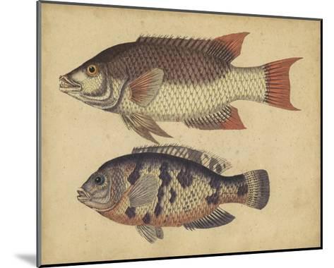 Species of Fish IV-Friedrich Strack-Mounted Art Print