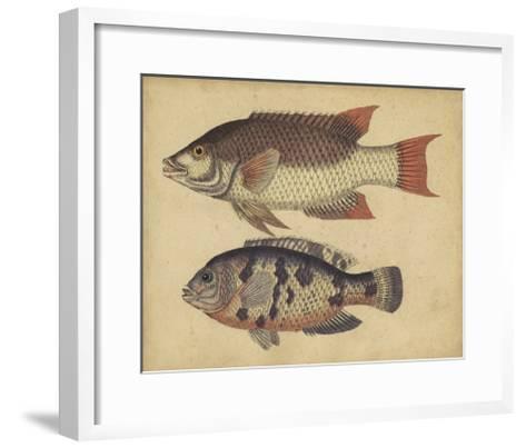 Species of Fish IV-Friedrich Strack-Framed Art Print