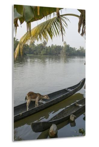 A Goat Waits on a Canoe Until its Owner Returns-Kelley Miller-Metal Print